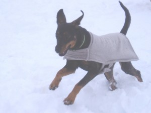 Gerry snow romp